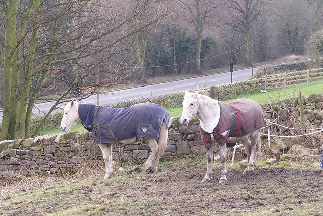 The Rivelin Horses, Tofts Lane, Rivelin Valley, Sheffield
