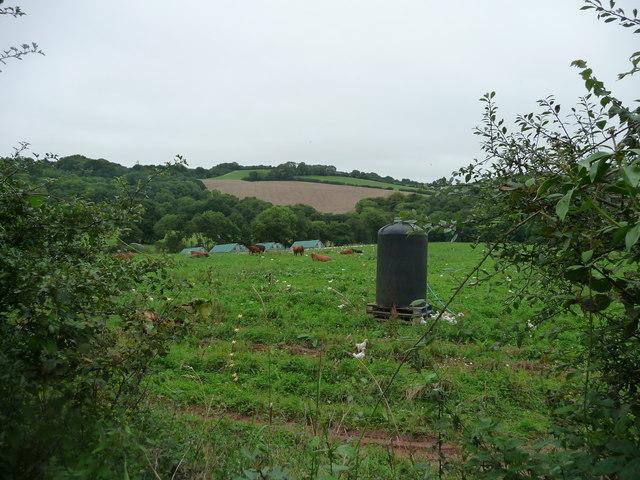 Mid Devon : Countryside