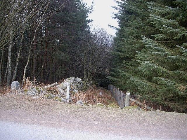 Boundary within woodland