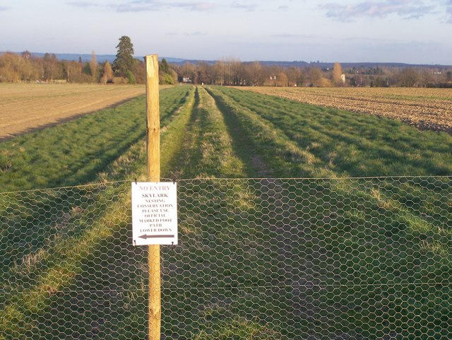 Footpath diversion due to nesting birds