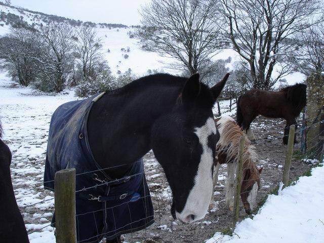 Horses near Truleigh Manor Farm
