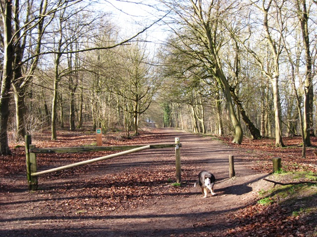 Woodland Track on Boddington Hill