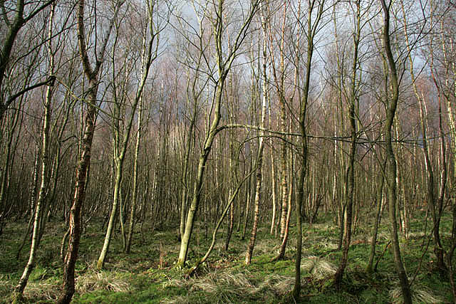 Pishwanton Wood