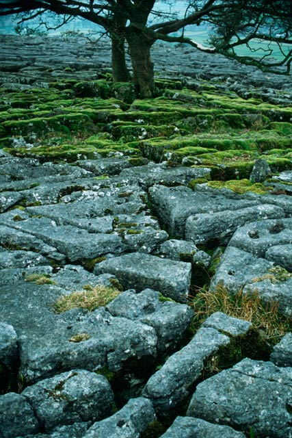 Limestone pavement, Oxenber