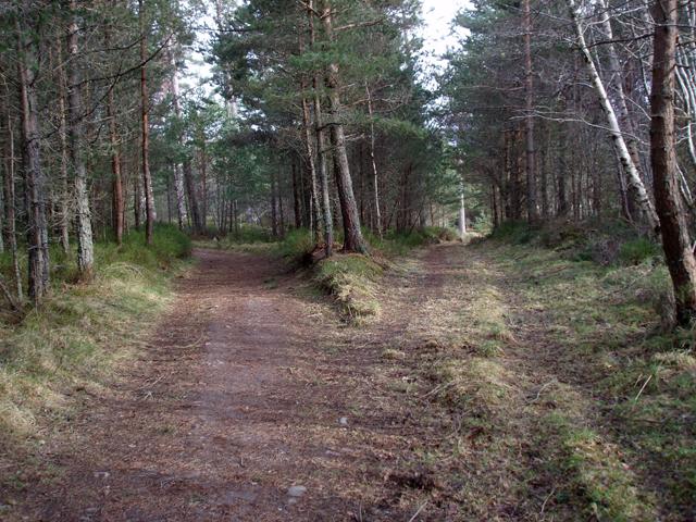 Tracks in Poorhouse Wood
