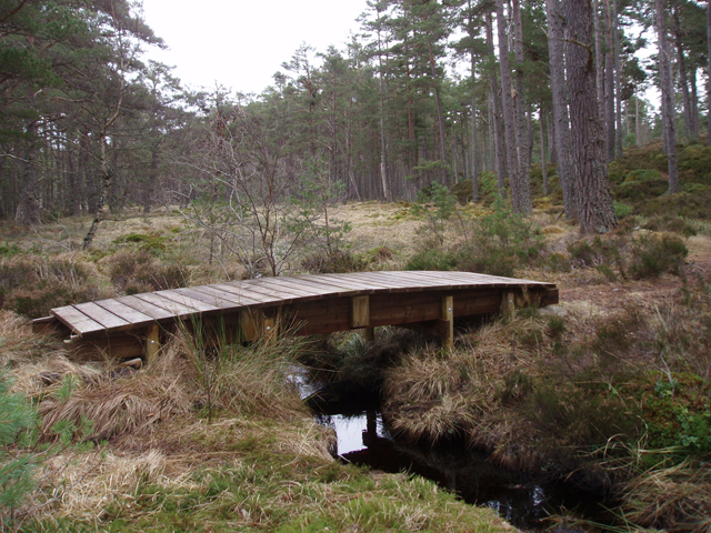 Footbridge in Anagach Wood