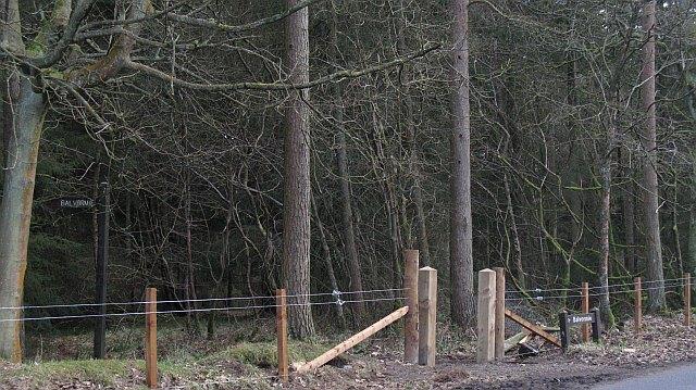 New fence, Beecraigs Wood