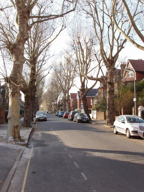 Leafless winter trees, Barrowgate Road, Chiswick