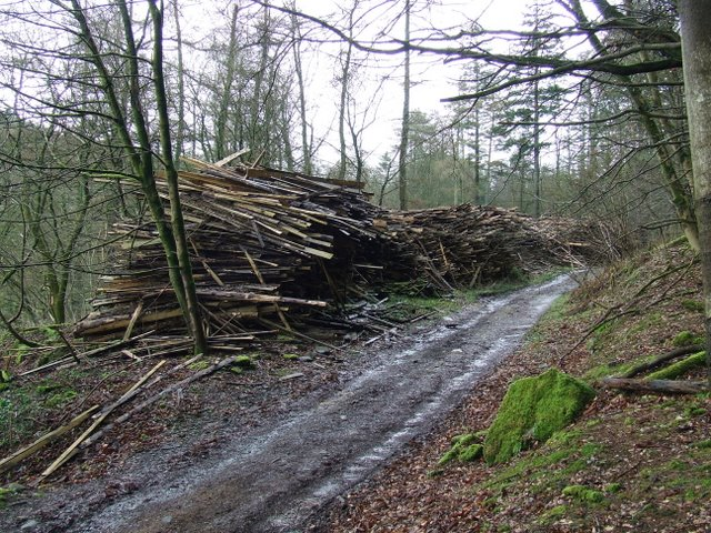 Log pile at Bankfoot