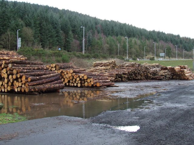 Log pile at Bankfoot