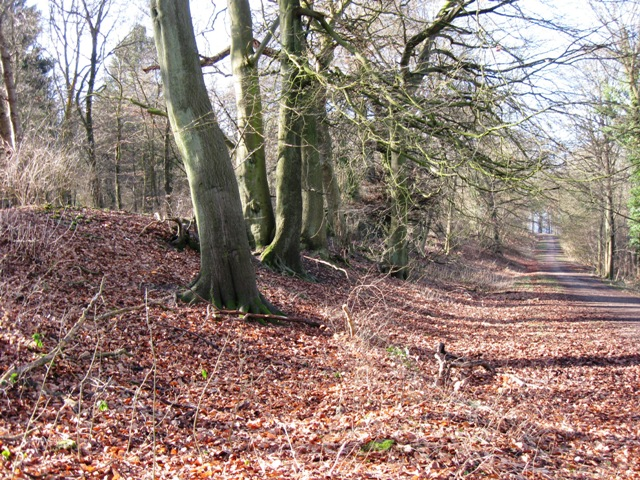 Trees on the Iron Age Bank