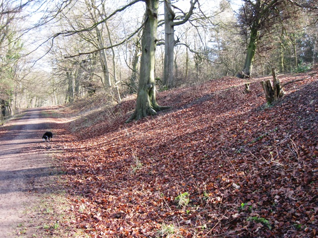 The Woodland Track on the north side of Boddington Banks