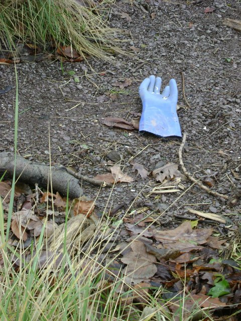 Glove, Teign estuary foreshore