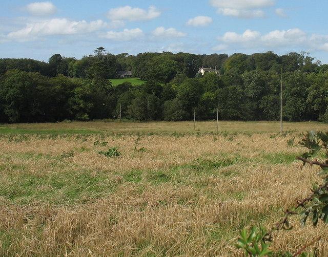 View across rough pasture and woodland towards Plas Tregayan