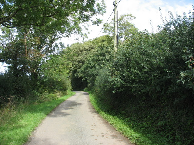 Trees and tall hedges along the road