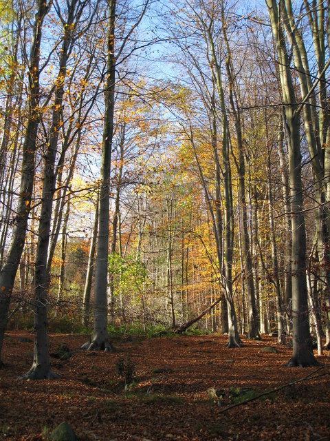 Shining Cliff Woods - Beeches