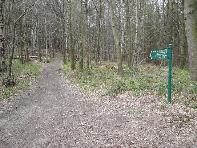 Shining Cliff Woods - Footpath to Alderwasley