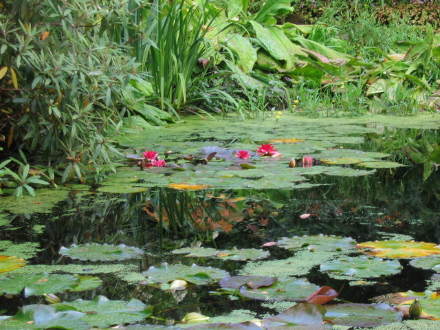 A lily pond at Inverewe Gardens