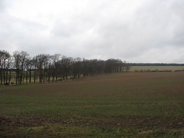 A freshly planted field