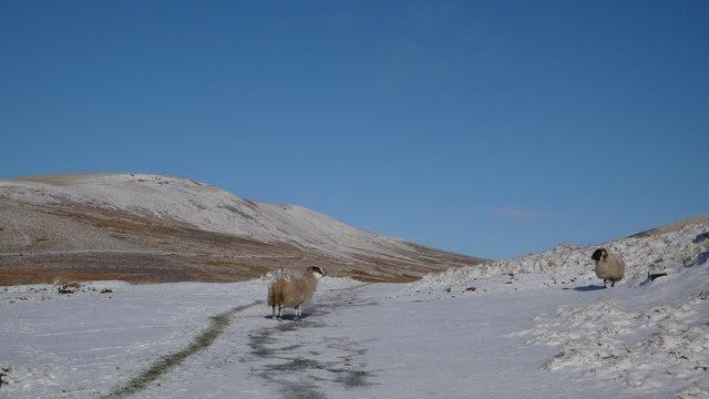 Grazing land above Glencorse