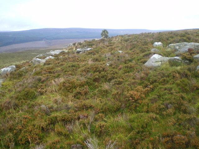 Cairn or ridge on Emblehope Moor