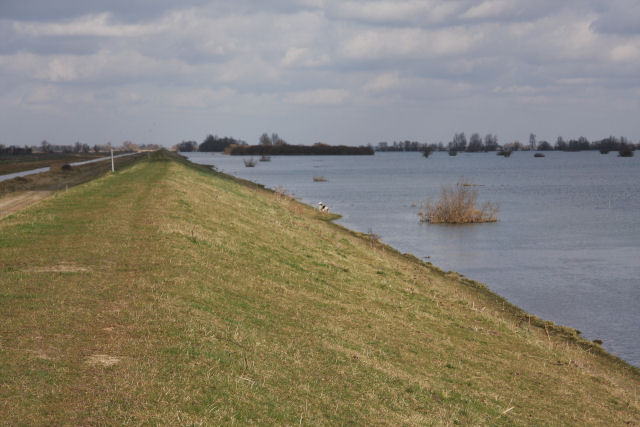 Old Bedford River and the Ouse Washes