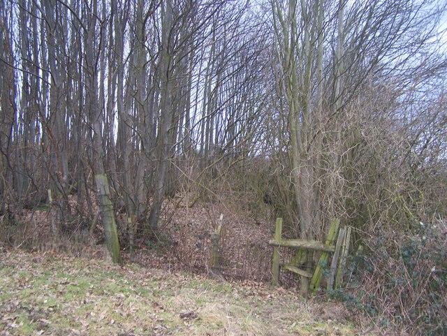 Footpath into Gaskin Wood