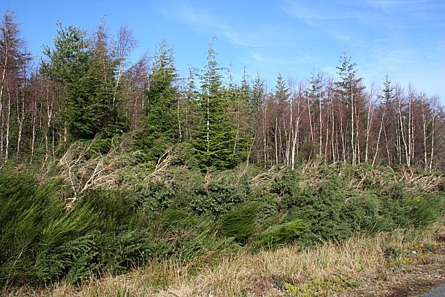 Teindland Wood