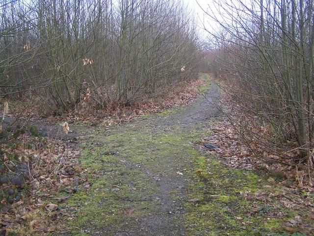 Bridleway junction in King's Wood