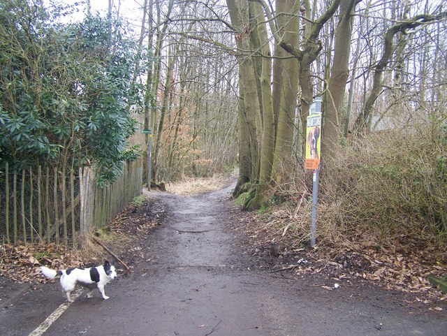 Bridleway from road into Kings Wood