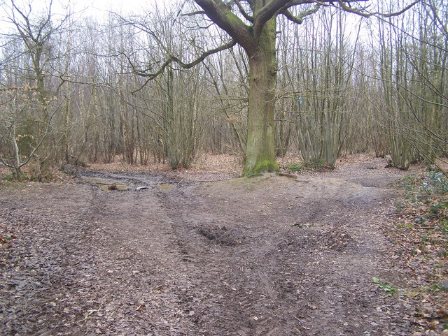 Footpath junction in Kings Wood