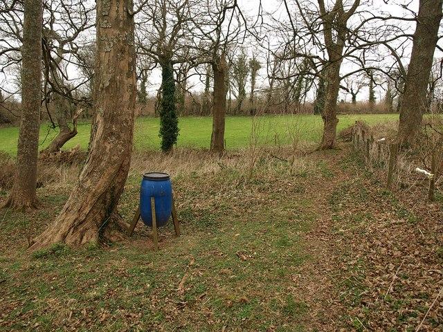 Bird feeder, Lupton Park