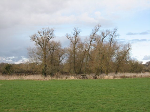 Walking white willows, Eye Mead