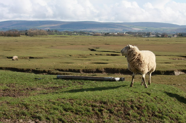 Ewe With a View