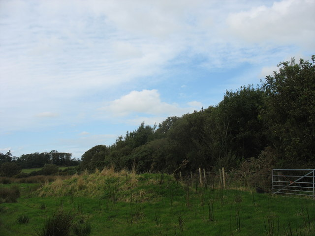 The southern edge of the Maen Eryr Covert