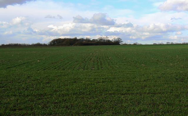 Field near Yatesbury