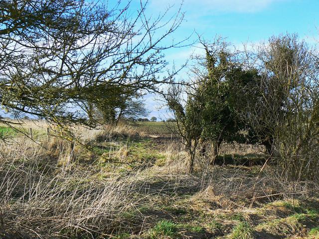 View north from a bridleway, near Berwick Bassett