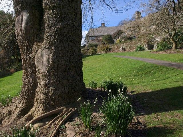 Tree, Coleton Fishacre