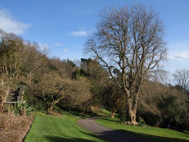 Coleton Fishacre garden