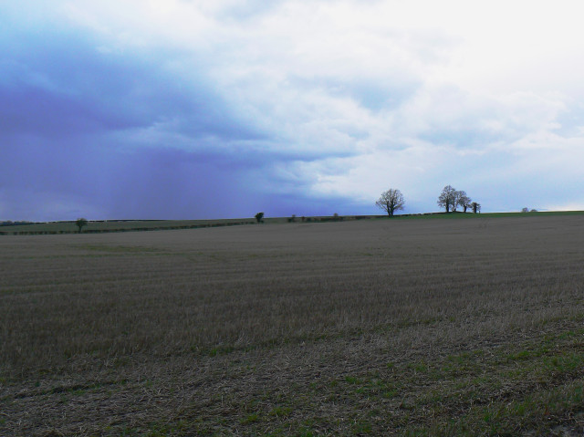 A field and trees, south-east of Clevancy