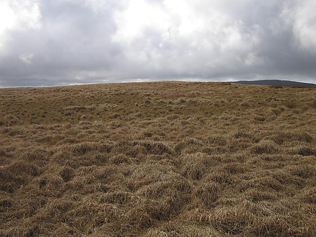 Moorland plateau on Bryn Moel