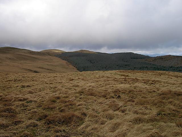 Summit of Bryn Moel and Mynydd Bychan forest