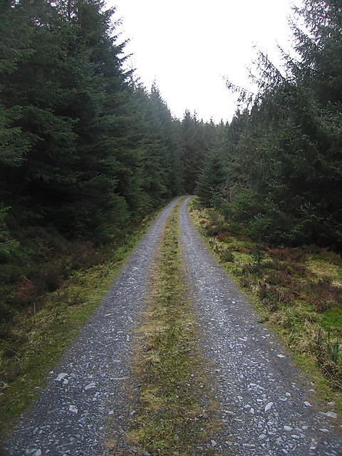 Mynydd Bychan forest track