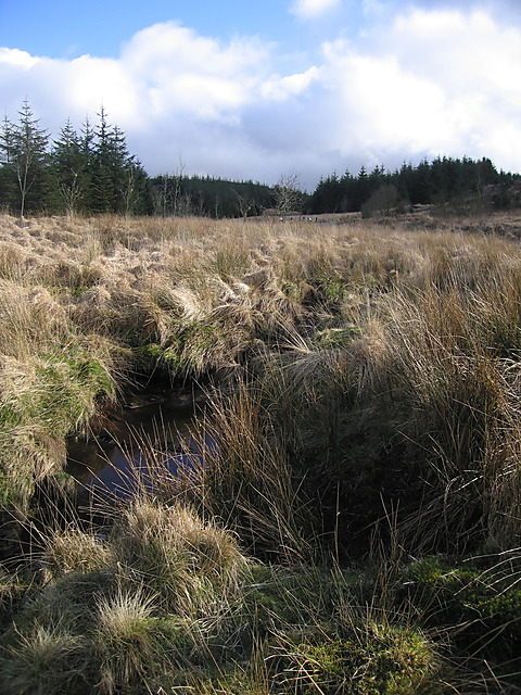 The northern Afon Hengwm
