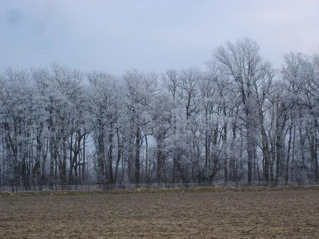 A heavy hoar frost coats the trees
