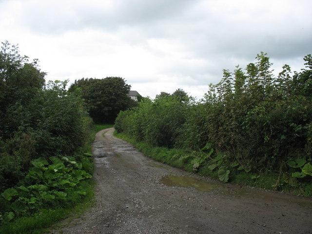 Driveway to Bodgynda Farm