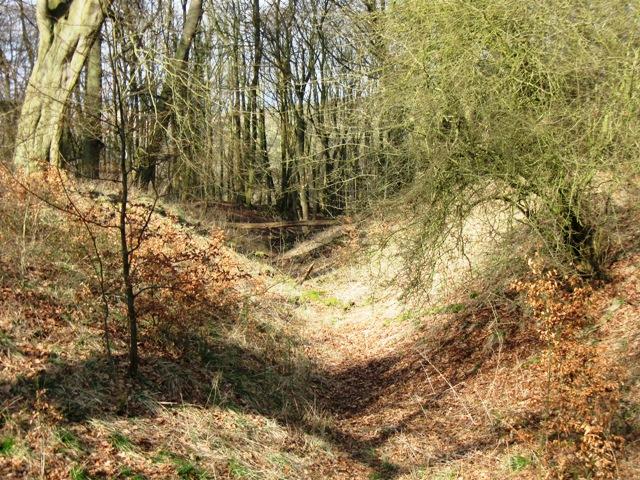 View of old Holloway near Moneybury Hill, Ashridge