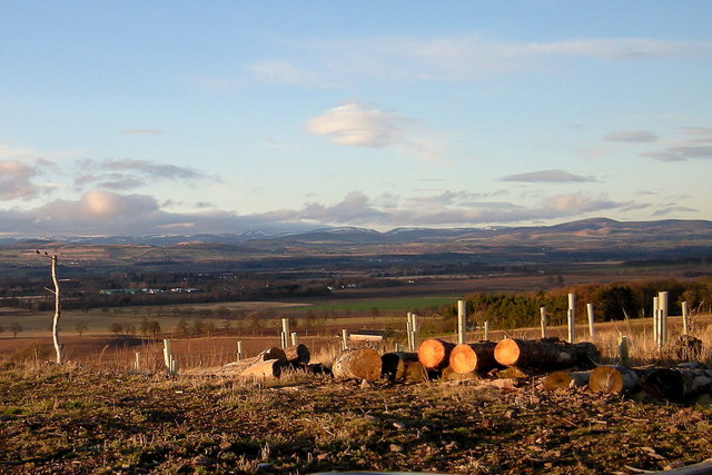Tree Planting and a view of the valley of Strathmore and Grampian Mountains