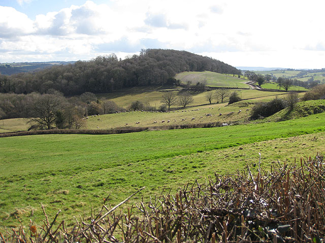 Sheep pasture above the Monnow Valley