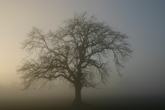 Tree silhouetted in radiation fog